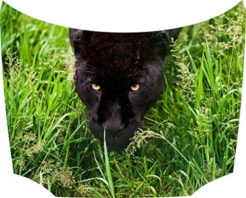 Bonnet Sticker Panther Grass: