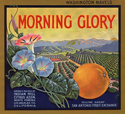 Morning Glory Brand - Pomona, California - Citrus Crate Label (9x12 Art Print, Wall Decor Travel Poster)