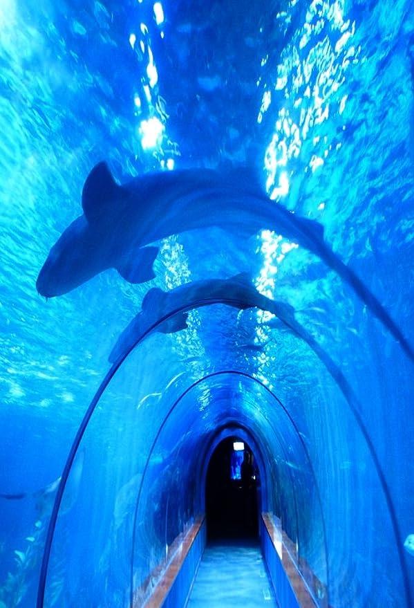 ... Mar Peces Azul Cristal túnel Boy bebé niños amante Kid Adult chica retrato artístico 3 x 5ft vinilo fotografía telón de fondo accesorios estudio de ...
