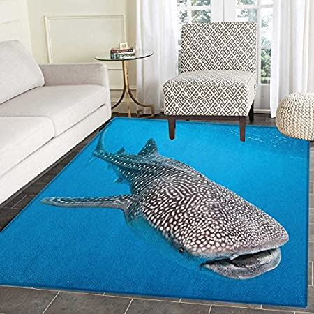 61d-S2QJdnL._SS450_ Whale Rugs and Whale Area Rugs