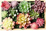 ZST-WZ Artificial Succulents Plants Flowers for Home Decor Indoor Wall Garden DIY Decorations (11 PCS Fake Succulents)