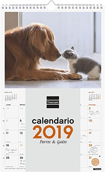 Finocam 780553019 - Calendario de pared 2019: Amazon.es: Oficina y papelería