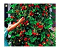 100 pcs tree climbing strawberry seeds courtyard garden with fruit and vegetable seeds potted