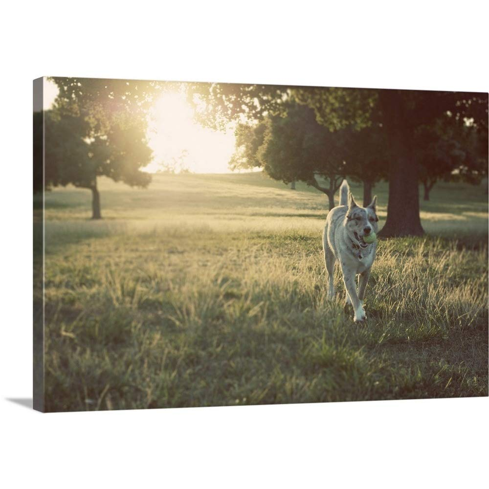 Great BIG Canvas Gallery-Wrapped Canvas Entitled Dog Playing Against Sunlight 24''x16''
