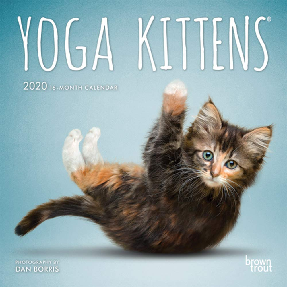 Best Yoga Books 2020 Yoga Kittens 2020 7 x 7 Inch Monthly Mini Wall Calendar, Animals