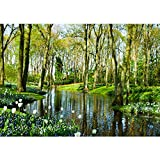 Non-woven photo wallpaper 350x245 cm PREMIUM PLUS Wall Mural Photo Wallpaper Picture - Forest Trees Nature - no. 256