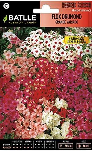 Semillas de Flores - Flox Drumond flor grande variada - Batlle: Amazon.es: Jardín