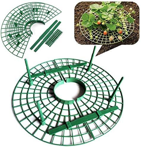 Samoda - Bandeja de flores para plantar fresas (plástico): Amazon ...