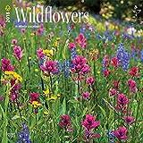 Wildflowers 2018