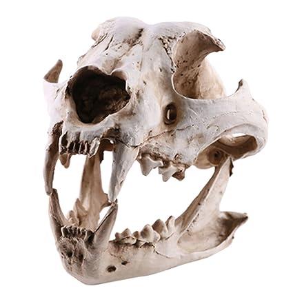 Amazon.com: Baosity Resin Dog Canine Model Anatomy Skull Head ...