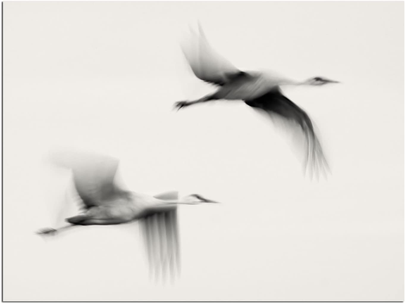 JP London Solvent Free Print PAPXS1X47896 Dreams Nature Crane Bird Fly Wind Ready to Frame Poster Wall Art 8 by 10