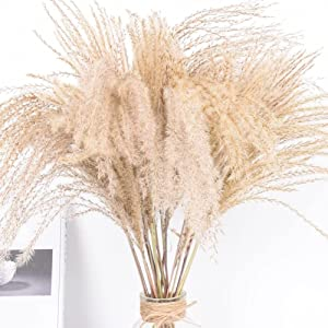 SELhome 50PCS Real Dried Small Pampas Grass Wedding Flower Bunch Natural Plants Home Decor Dried Flowers Phragmites Flower Ornamental Style 4400