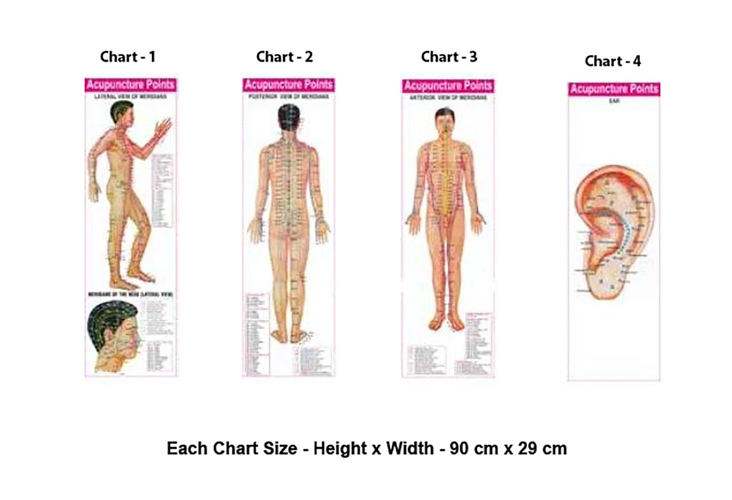 Acupuncture Points (3 Body + 1 Ear) Charts (Set of 4) + Free 5 Sujok Rings