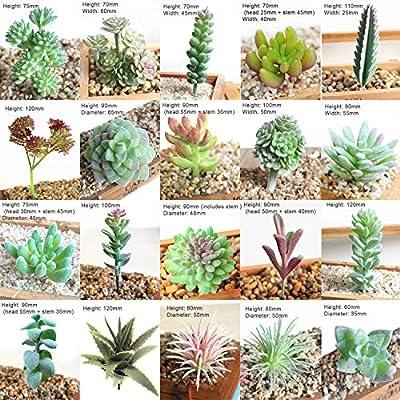 20 Pcs Artificial Succulent Plants Faux Flocking Succulents Assorted Unpotted Succulent Plants Arrangement Textured Cactus Stems Picks for Home Decor Indoor Wall Garden DIY Decorations