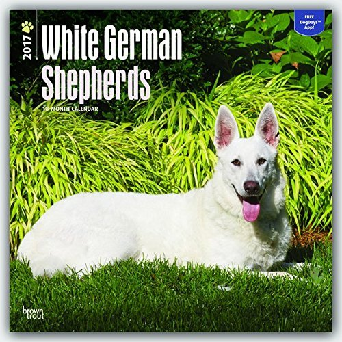 White German Shepherds - 2017 Calendar 12 x 12in