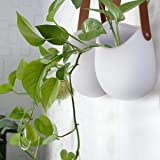 "Wall Hanging Planters - Modern Wall Decor 7.5"" X"
