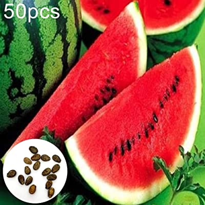 Watermelon Seeds, 50Pcs Watermelon Seeds Sweet Summer Juicy Fruit Garden Yard Farm Field Plant - Watermelon Seeds by ToataLOpen : Garden & Outdoor