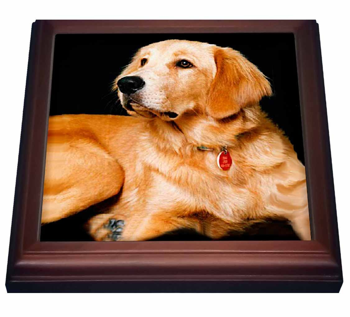 3dRose trv_254_1 Golden Retriever Trivet with Ceramic Tile, 8 by 8'', Brown by 3dRose