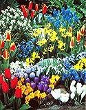A Complete Spring untill winter bulbs - 30 Flower Bulbs