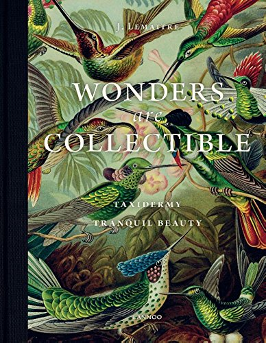 Wonders Are Collectible: Taxidermy: The Beauty of Beetles, Bugs and Butterflies