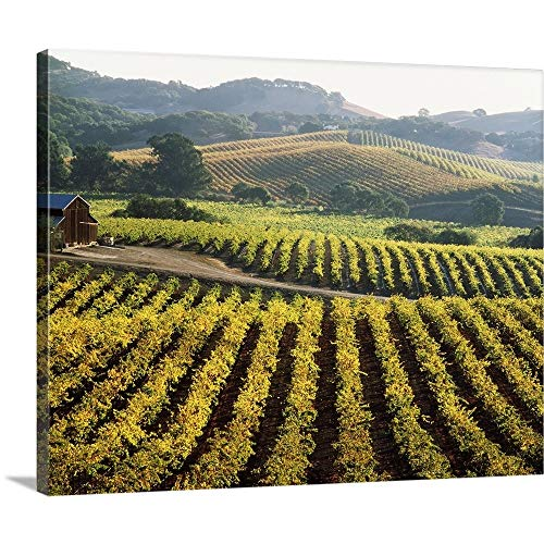 Vineyard at Domaine Carneros Winery, Sonoma Valley, California Canvas Wall Art Print, 30
