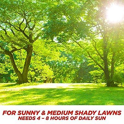 Pennington Smart Sun & Shade Grass Seed, 3 Pounds: Garden & Outdoor