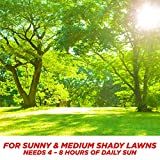 Pennington Smart Sun and Shade Grass Seed, 7 Pounds