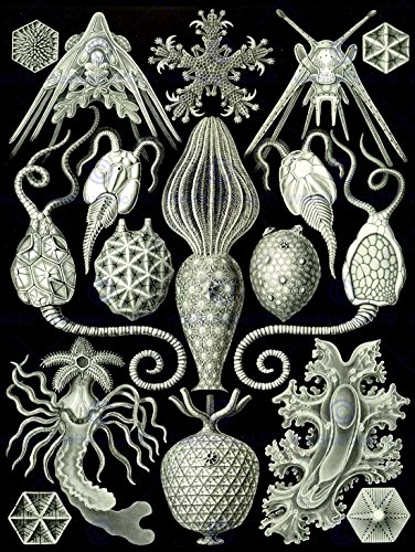 NATURE ART ERNST HAECKEL SEA CREATURES BIOLOGY GERMANY VINTAGE POSTER ART - Time Priority Us Delivery Mail International