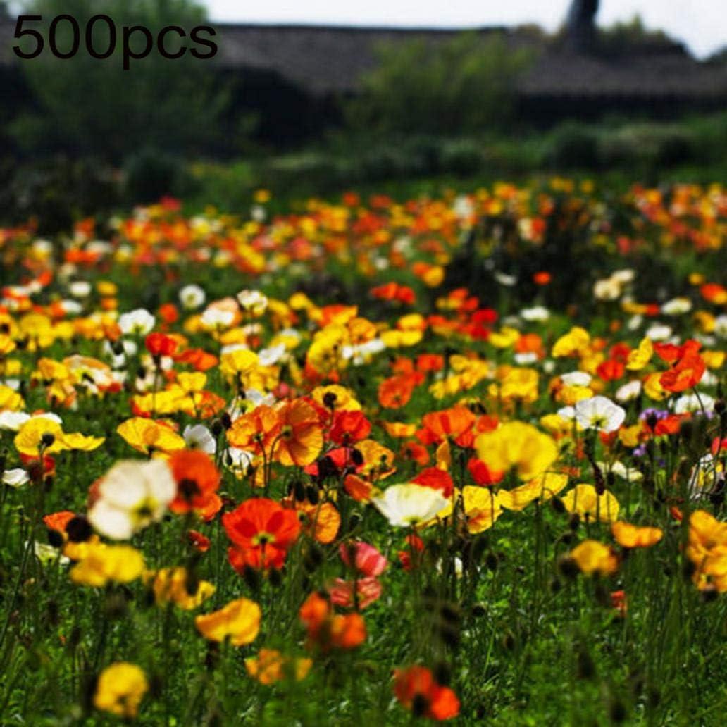 Uticon 500pcs Raras Semillas De Papaver Rhoeas Home Garden Park Balc¨®N Bonsai Decoraci¨®N - 500pcs Semillas De Amapola De Ma¨ªZ