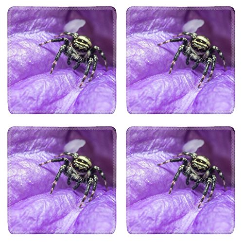 Catch 8 Net (Liili natural rubber Square Coasters IMAGE ID: 35129723 A small creature with eight thin legs Many spiders spin webs nets of thin threads to catch insects for)