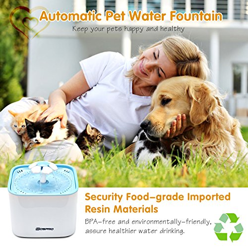 Buy ceramic water fountain for cats