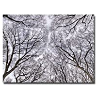 Look Up by Ariane Moshayedi, 30x47-Inch Canvas Wall Art