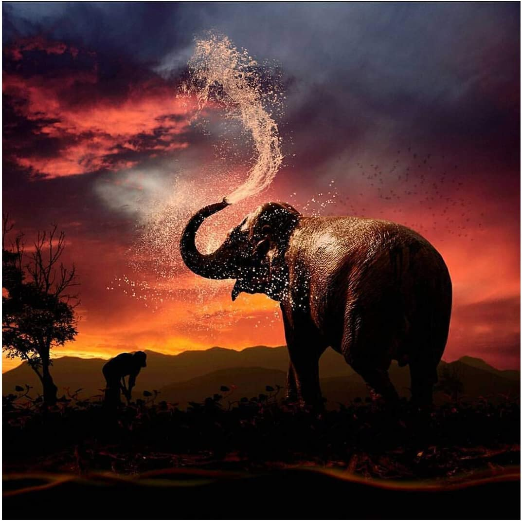 Mobicus DIY 5D Diamond Painting by Number Kit for Adult, Full Drill Diamond Embroidery Dotz Kit Home Wall Decor-Elephant