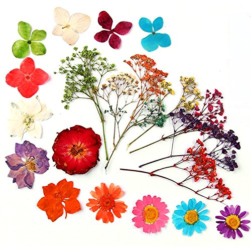 100pcs Assorted Press Dried Flower Filler For Epoxy Resin for Making Craft DIY Accessories (Resin Accessories)