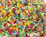 NAVA CHIANGMAI Mini Rainbow Rose Color Mulberry