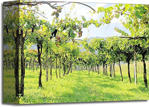 Vineyard Gallery Wrapped Canvas Art (8 in. x 10 in.)