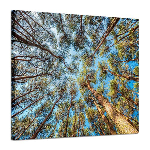 (Tree Canvas Wall Art Pictures:Low Angle View Forest Artwork Painting Print on Canvas for Dining Room (24'' x 18''))