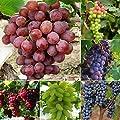 Wintefei 50Pcs Mixed Grapes Seeds Delicious Fresh Fruit Garden Tree Plants Decoration