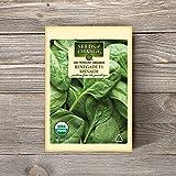Seeds of Change S21660 Certified Organic Renegade