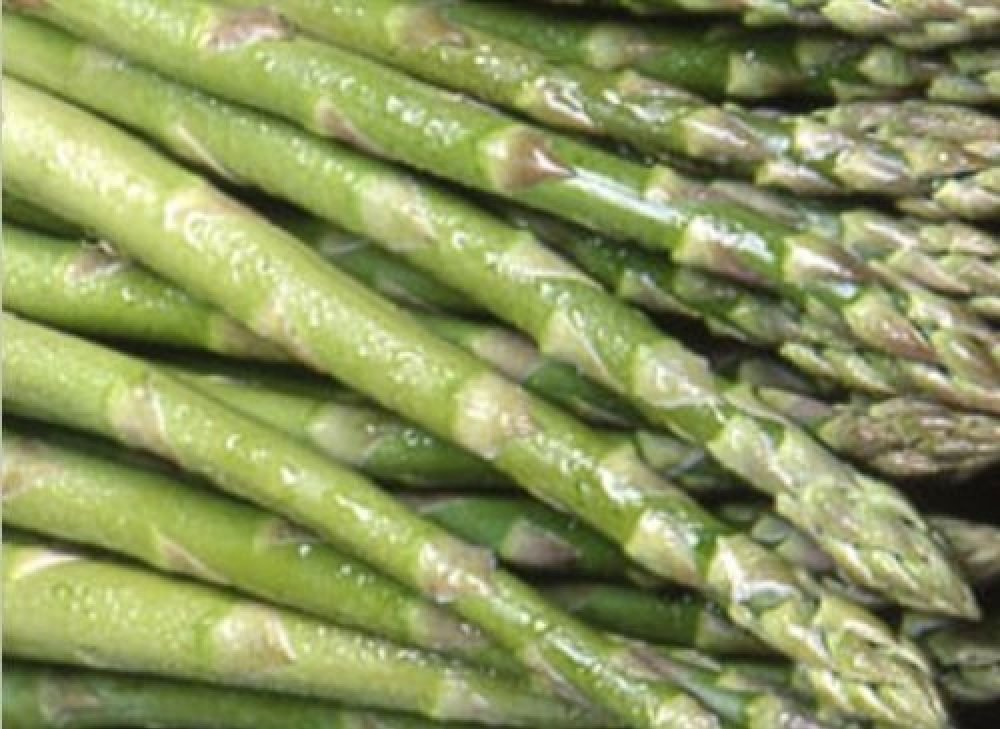 Asparagus Pacific 2000 Crowns Pack of 10 Direct Plants