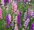 "Organic Larkspur (delphinium Consolida) ""galilee Mix"" Long Tapered Stalks Makes This Flower Regal In Appearance Approx 225 Seeds"