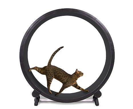 Un gato rápida Ejercicio rueda: Amazon.es: Productos para ...