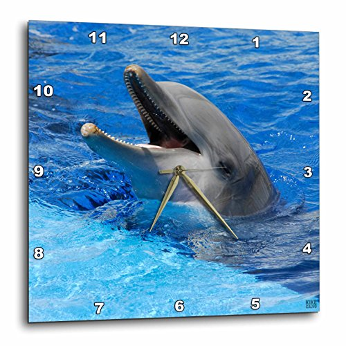 3dRose dpp_37745_2 Dolphin with its Mouth Open at Oceanographic Aquarium in Valencia, Spain-Wall Clock, 13 by 13-Inch by 3dRose