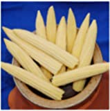 Premier Seeds Direct SWC09 Sweet Corn Minipop F1 Seeds (Pack of 130 Seeds)