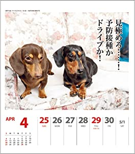 2021年 ダックス川柳(週めくり)カレンダー