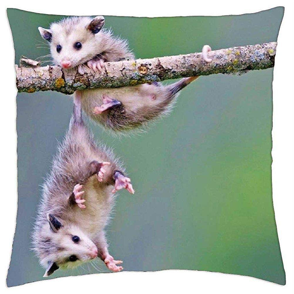"EGDE4 Decor Pillows Possums Home Decor Pillow Decorative Throw Pillow Case Cushion Cover 18"" x 18"""