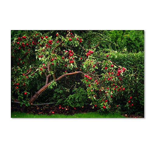 The Apple Tree by Philippe Sainte-Laudy Wall Decor, 30 by 47-Inch Canvas Wall Art ()