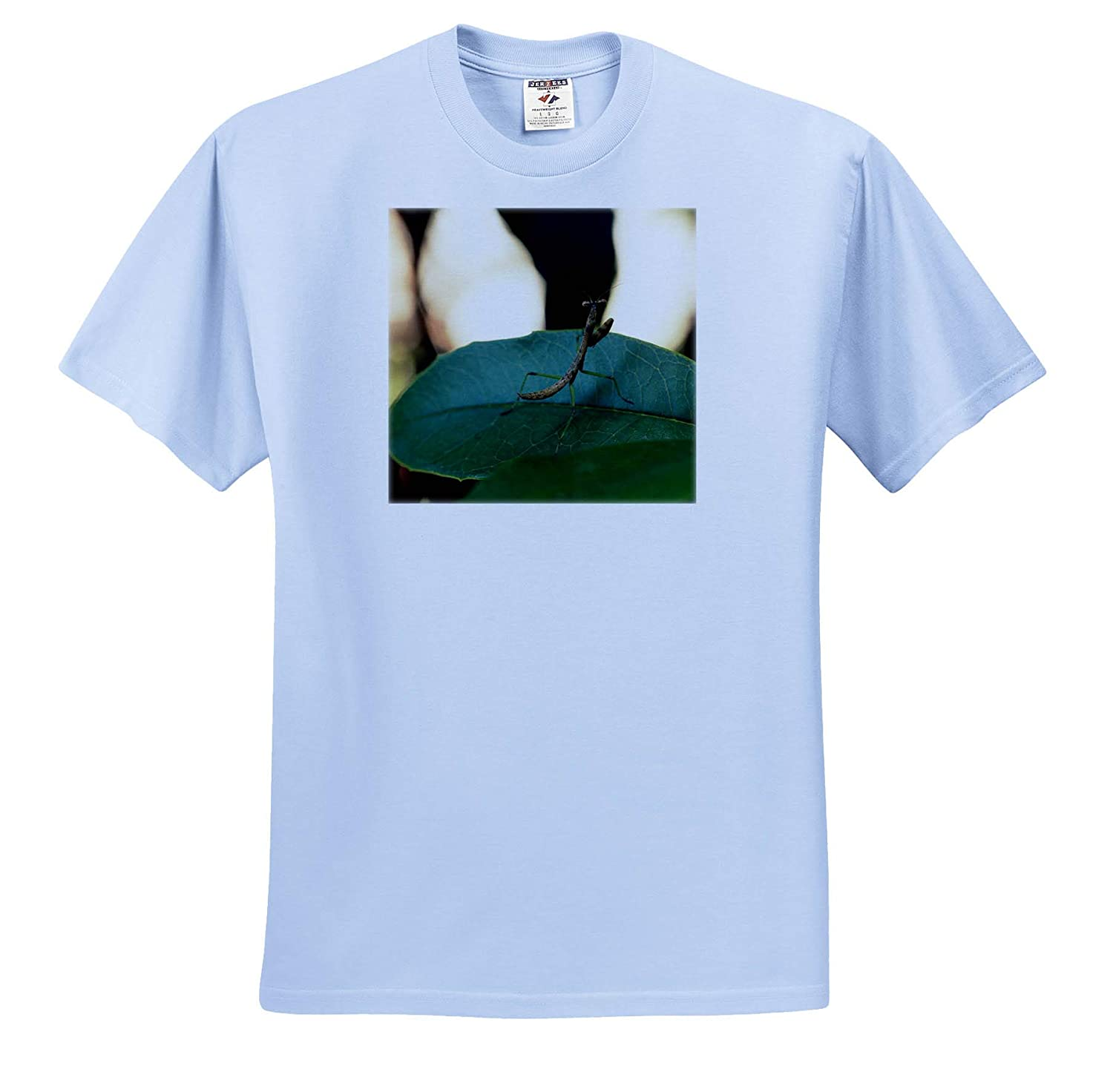 Insects 3dRose Stamp City Macro Photograph of The Back of a Baby Praying Mantis on a Leaf - Adult T-Shirt XL ts/_319048