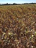 Birds LOVE Economy & Thin Special Spray Millet