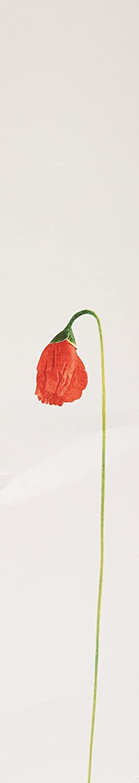 KENZO FLOWERS 100 VAPO EDP: Amazon.es: Belleza